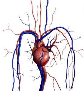 difference between artery and vein